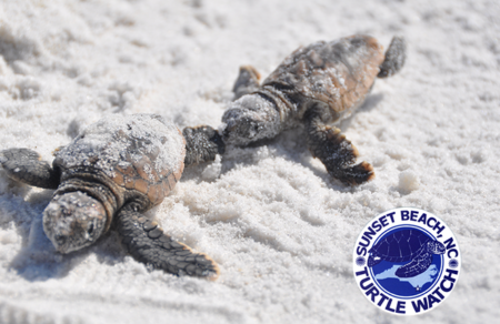 Sea Turtle Talk – Sunset Beach